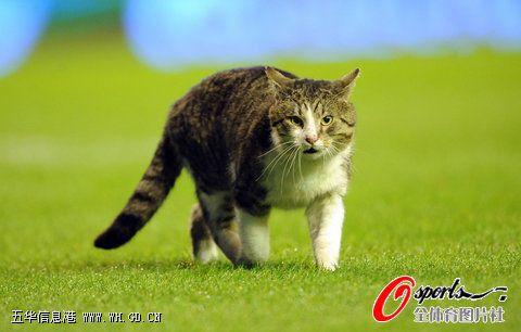 细数足球场上的小动物 猫咪小鸟爱看球